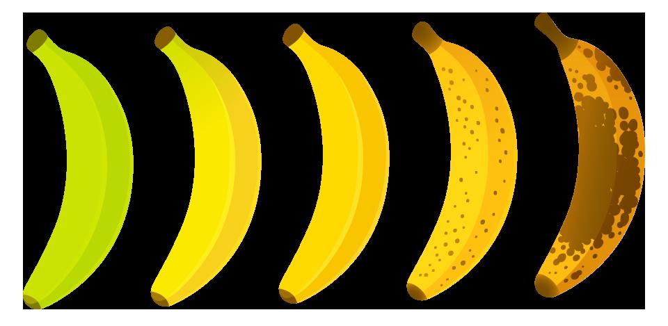 lavida_banana_the_banana_paradise